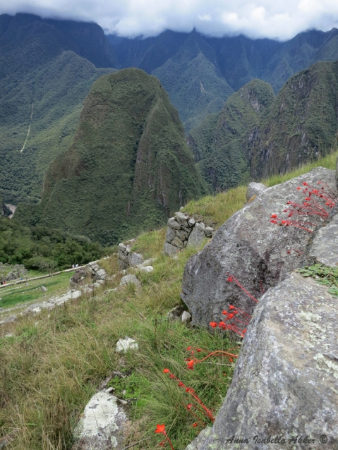 Terraces descending down Machu Picchu, along with strange bright-red plants (which I'm guessing use something other than chlorophyll) that grew all along the mountain, but that I saw nowhere else in Perú.